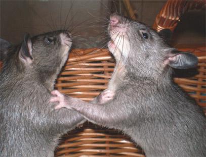 Beim hamster schauen - 4 7
