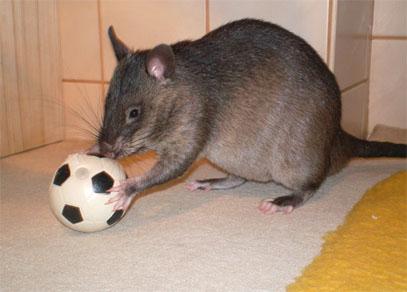 Beim hamster schauen - 4 6